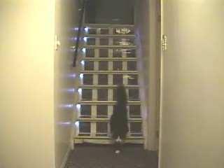 cat coming down the stairs after activating the top stair beam sensor which turned the led stair lights on when the lights are off and it is dark outside basement stairwell lighting
